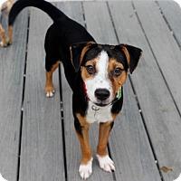 Adopt A Pet :: Popcorn - Atlanta, GA