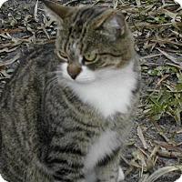 Adopt A Pet :: Button - Naples, FL