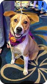 Border Collie Mix Dog for adoption in Natchitoches, Louisiana - Dollie