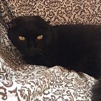 Adopt A Pet :: Posh - Alexandria, VA
