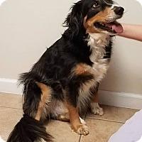 Adopt A Pet :: Winston $125 - Seneca, SC