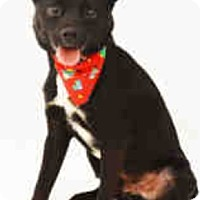 Adopt A Pet :: Baxter - West Palm Beach, FL