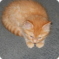 Adopt A Pet :: Milo - Olivet, MI