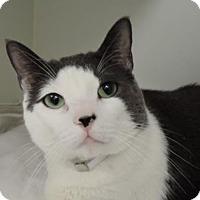 Adopt A Pet :: Bundles - New York, NY
