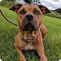 Adopt A Pet :: Asia - Lisbon, OH