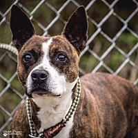 Adopt A Pet :: Chyna - Columbia, IL