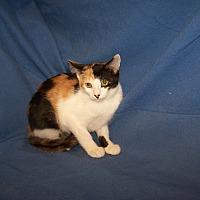 Adopt A Pet :: K-Fountain1-Tulsa - Colorado Springs, CO