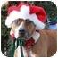 Photo 2 - Boxer/American Pit Bull Terrier Mix Dog for adoption in Staunton, Virginia - Shiripa