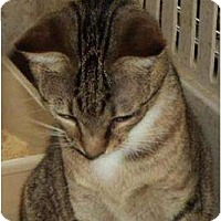 Adopt A Pet :: Toth - Crescent, OK