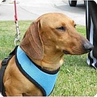Adopt A Pet :: Reed - San Jose, CA
