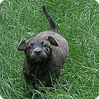 Adopt A Pet :: Stubby - Holland, MI
