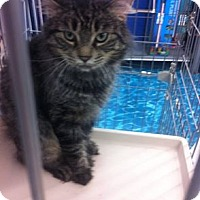 Adopt A Pet :: Prince Gabriel - Sterling Hgts, MI