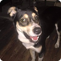 Adopt A Pet :: Romeo - Adoption Pending - Youngstown, OH