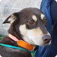 Adopt A Pet :: Adrianna - Erwin, TN
