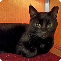 Adopt A Pet :: Shadow - Elyria, OH
