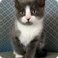 Adopt A Pet :: Coleen - Sherman Oaks, CA