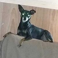 Adopt A Pet :: Athena - Carthage, NC