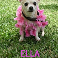 Adopt A Pet :: Ella - Houston, TX