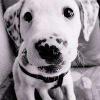Adopt A Pet :: Skylar - Harrah, OK