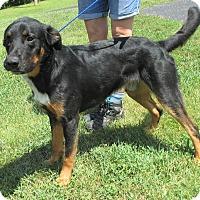 Adopt A Pet :: Cash - Reeds Spring, MO