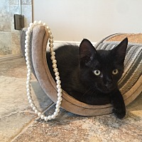 Adopt A Pet :: Jewels - Houston, TX