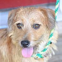 Adopt A Pet :: Skipper - Alabaster, AL