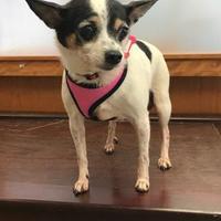 Adopt A Pet :: Dani - San Francisco, CA