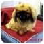 Photo 1 - Pekingese Mix Dog for adoption in Slidell, Louisiana - Rudolph