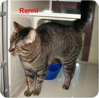 Domestic Shorthair Cat for adoption in Slidell, Louisiana - Renni