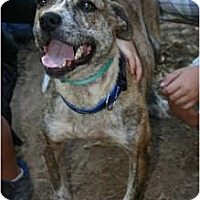 Adopt A Pet :: Tuffy- COURTESY LISTING - Killen, AL