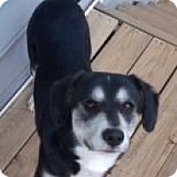 Adopt A Pet :: Sampson - Charlotte, NC