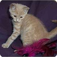 Adopt A Pet :: Nip - Spencer, NY
