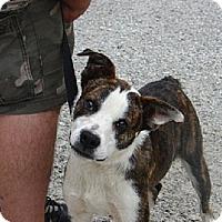 Adopt A Pet :: TIPPY - Scottsburg, IN