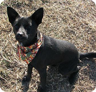 Spitz (Unknown Type, Medium)/Pomeranian Mix Dog for adoption in Moosup, Connecticut - TURBO