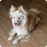 Adopt A Pet :: Bud - Carey, OH