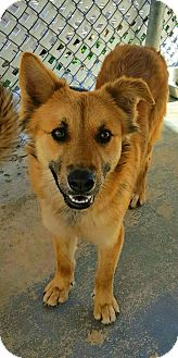 German Shepherd Dog Mix Dog for adoption in San Antonio, Texas - Jenny
