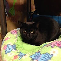 Adopt A Pet :: Sable - Byron Center, MI