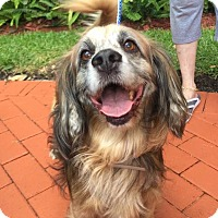 Adopt A Pet :: George - Cape Coral, FL