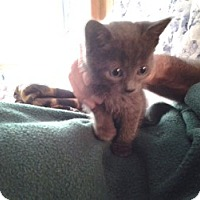Adopt A Pet :: Minnie Mouse - Middletown, CT
