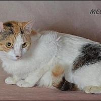 Adopt A Pet :: Mew - Trexlertown, PA