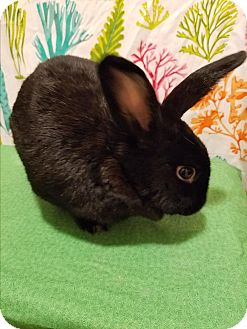 New Zealand Mix for adoption in West Palm Beach, Florida - Big Mama