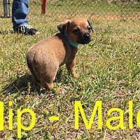 Adopt A Pet :: Hipp/ Harley - Waycross, GA