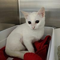 Adopt A Pet :: Sugar - Armuchee, GA