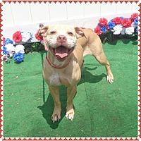 Adopt A Pet :: KiKI - Harrisville, RI