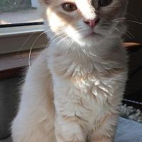 Adopt A Pet :: Peaches - Flower Mound, TX