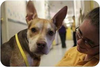 Terrier (Unknown Type, Medium)/Shepherd (Unknown Type) Mix Dog for adoption in Parker, Texas - Kip