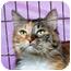 Photo 1 - Domestic Longhair Cat for adoption in Sacramento, California - Laura L