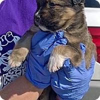 Adopt A Pet :: Sargent - Ranger, TX
