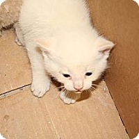 Adopt A Pet :: Sinbad - Washington Terrace, UT