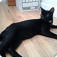 Adopt A Pet :: Bailey - Modesto, CA